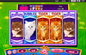 Omg kittens slot online poker forum canada
