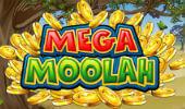 Mega Moolah Jackpot Won